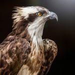 Adler - Fototour Wildtierpark Eekholdt - Werkstatt Bild und Sprache